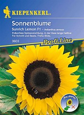 Kiepenkerl Helianthus Sunrich Lemon