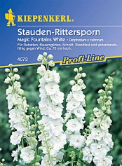 Kiepenkerl Delphinium x cultorum/Stauden Magic Fountains White
