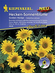 Kiepenkerl Helianthus Golden Hedge